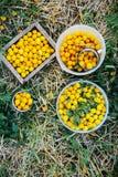 Diversa fruta colorida del verano encendido al aire libre Yel orgánico de cosecha propia Foto de archivo libre de regalías