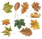 Diversa hoja del otoño del parque aislado en el fondo blanco Imagenes de archivo
