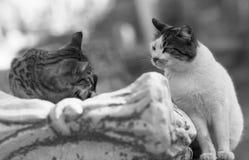 Diversa vista del amor Foto de archivo libre de regalías