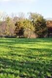 Diversas árvores amarelas do outono na grama verde Foto de Stock Royalty Free