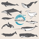 Diversas ballenas fijadas Foto de archivo libre de regalías