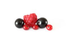 Diversas bayas de las frutas frescas (frambuesas, grosellas negras, pasas rojas) en el fondo blanco Imagen de archivo libre de regalías