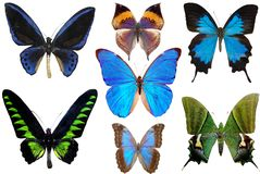 Diversas borboletas Imagem de Stock Royalty Free