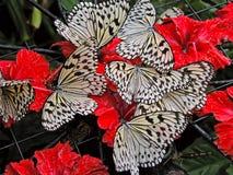 Diversas borboletas brancas em flores vermelhas foto de stock