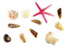 Diversas cáscaras y estrellas de mar del mar en un fondo blanco Imagen de archivo libre de regalías