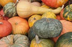 Diversas calabazas para Halloween Fotos de archivo