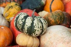 Diversas calabazas para Halloween Imagen de archivo libre de regalías