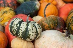 Diversas calabazas para Halloween Fotografía de archivo libre de regalías