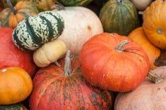 Diversas calabazas para Halloween Foto de archivo libre de regalías