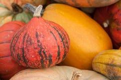 Diversas calabazas para Halloween Imagen de archivo