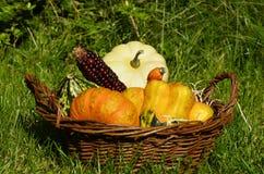 Diversas calabazas y una mazorca de maíz en una cesta fotografía de archivo libre de regalías