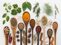 Diversas clases de especias y de hierbas con la cuchara de madera en el backg blanco Fotos de archivo