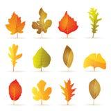 Diversas clases de iconos de la hoja del otoño del árbol Fotografía de archivo libre de regalías