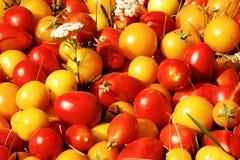 Diversas clases de tomates Imagen de archivo libre de regalías
