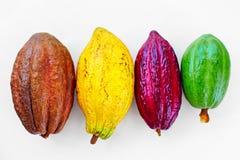 Diversas clases de vainas coloridas del cacao en blanco Imagen de archivo libre de regalías