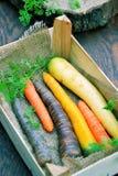 Diversas clases de zanahorias Fotografía de archivo