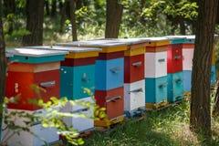 Diversas colmeia multi-coloridas estão na floresta em um dia de mola ensolarado Imagem de Stock Royalty Free