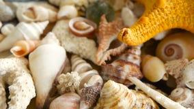 Diversas conchas marinas coloridas mezcladas como fondo Diversos corales, molusco marino y cáscaras de concha de peregrino almacen de video