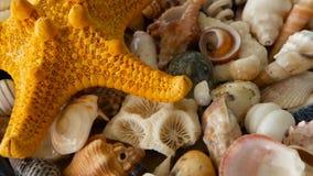 Diversas conchas marinas coloridas mezcladas como fondo Diversos corales, molusco marino y cáscaras de concha de peregrino metrajes