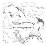 Diversas criaturas del mar del bosquejo Tortuga, ballena, morsa, delfín y otros libre illustration
