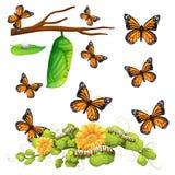 Diversas etapas de la mariposa Imagen de archivo