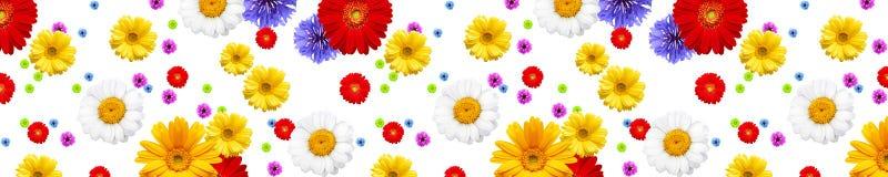 Diversas flores Imágenes de archivo libres de regalías
