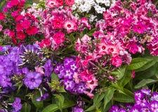 Diversas flores Fotografía de archivo