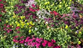 Diversas flores del color Imagen de archivo