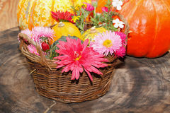 Diversas flores del jardín de las flores y calabazas ornamentales en una cesta Fotos de archivo libres de regalías