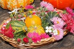 Diversas flores del jardín de las flores y calabazas ornamentales en una cesta Imágenes de archivo libres de regalías