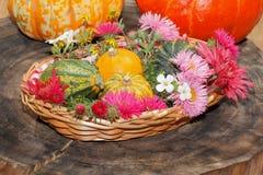 Diversas flores del jardín de las flores y calabazas ornamentales en una cesta Fotografía de archivo libre de regalías