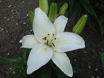 Diversas flores del jardín de Rusia foto de archivo libre de regalías