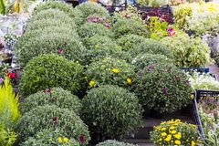 Diversas flores del jardín en venta de los potes imágenes de archivo libres de regalías