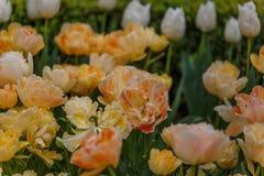Diversas flores do amarelo com uma cor vermelha macia Imagem de Stock Royalty Free