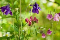 Diversas flores en el jardín Imagenes de archivo