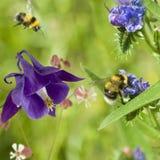 Diversas flores en el jardín Fotografía de archivo libre de regalías
