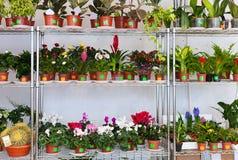 Diversas flores en potes de flores Imagen de archivo libre de regalías