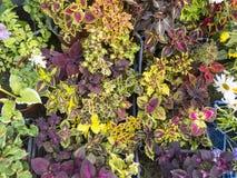 Diversas flores en potes en el mercado de la granja Imagenes de archivo