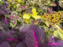 Diversas flores en potes en el mercado de la granja Foto de archivo libre de regalías