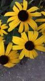 Diversas flores materiales video del sol fotografía de archivo libre de regalías