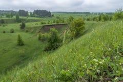Diversas flores na paisagem stemspring, morangos de florescência da morango na montanha imagens de stock royalty free