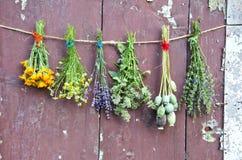 Diversas flores y manojo médico de la hierba en la pared de madera del grunge Fotos de archivo