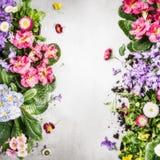Diversas flores y plantas coloridas, visión superior, marco del jardín Fotos de archivo
