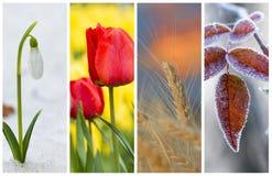 Diversas fotos da natureza bonita Conceito do ciclo de vida Imagem de Stock Royalty Free