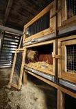 Diversas gaiolas do coelho Imagens de Stock