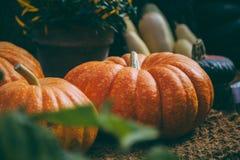 Diversas grandes abóboras alaranjadas no primeiro plano Imagem de Stock Royalty Free
