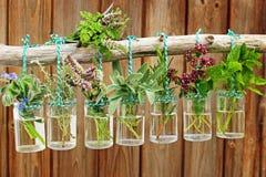 Diversas hierbas frescas Imagen de archivo
