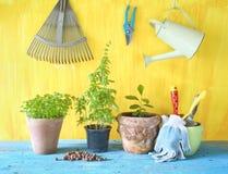Diversas hierbas y herramientas que cultivan un huerto, Fotografía de archivo libre de regalías