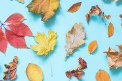 Diversas hojas caidas en azul dinámico Composición del otoño como modelo Visión superior foto de archivo