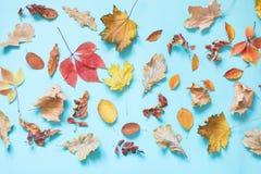Diversas hojas caidas en azul dinámico Composición del otoño como modelo Visión superior fotos de archivo libres de regalías